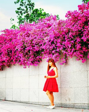 Singapore doesn't have cherry blossoms or big tulips or sunflowers fields but we do have quite a number of Bougainvillea which is a signature plant in the Singapore landscape. Have you seen them yet?⁣ .⁣ .⁣ .⁣ .⁣ .⁣ #instravel #travelgirlsgo #sheisnotlost #girlaroundworld #speechlessplaces #iamtb #travelbloggers #iammissadventure #yololttw #travelcommunity #gltlove #femmetravel #traveltagged #damestravel #citizenfemme #ladiesgoneglobal #wearetravelgirls #pinktrotter #girlsdreamtravel #travelrepost #femaletravelbloggers #darlingescapes #dametraveler #borntoroam #thewanderingtourist #traveldreamseekers #singapore #clozette #FollowChertoSingapore