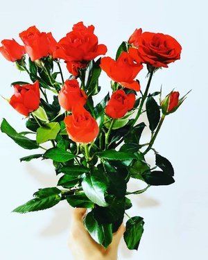 Woke this up to these this morning. Thank you daddy. 🌹  #simplehappiness # 爸爸出新招 #mysweetdaddy #mysweetparents #familylove #roses #redroses #9august #August #xinlisfavouritemonth #生日快樂 #birthday #clozette